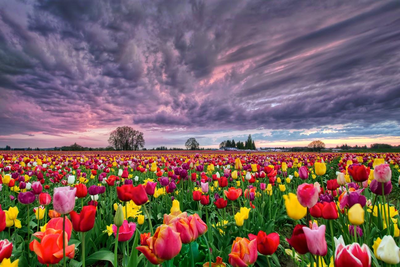 18 Ladang Dan Taman Bunga Yang Indah Di Dunia Welcome To My Web